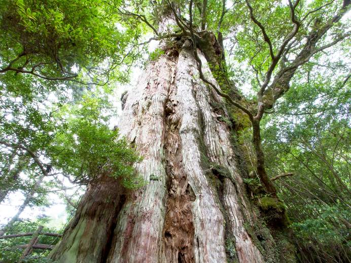 佐賀から屋久島へのアクセス - ...